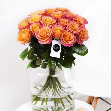 Miss Piggi 22 róż