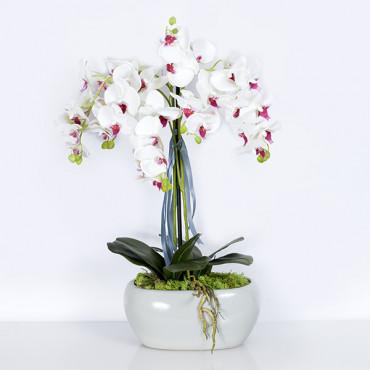 """Ekskluzywna Orchidea """"Miri"""" ok.65cm"""